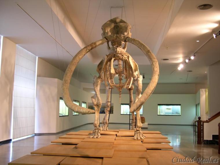 MUSEO PROVINCIAL DE CIUDAD REAL.jpg