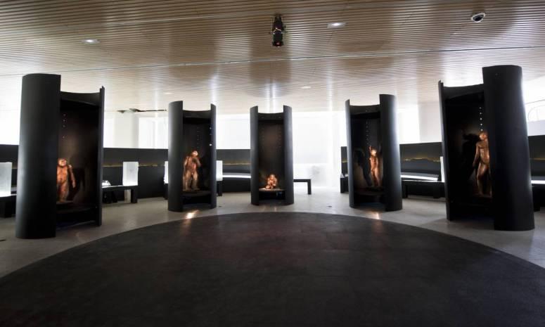 7. MUSEO DE LA EVOLUCIÓN HUMANA (BURGOS) INTERIOR